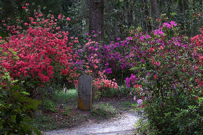 Magnolia Plantation and Gardens Cemetery