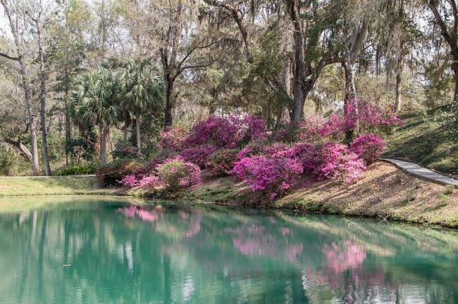 Mepkin Abbey Pond
