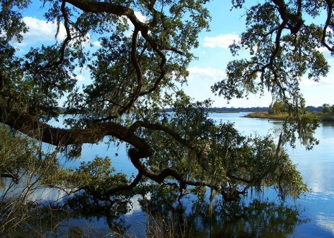 Mepkin Abbey Cooper River