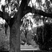 Mepkin Plantation