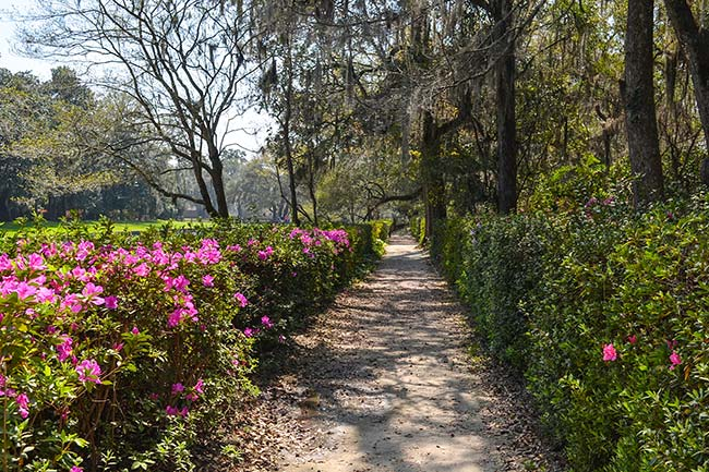 Middleton Place Path