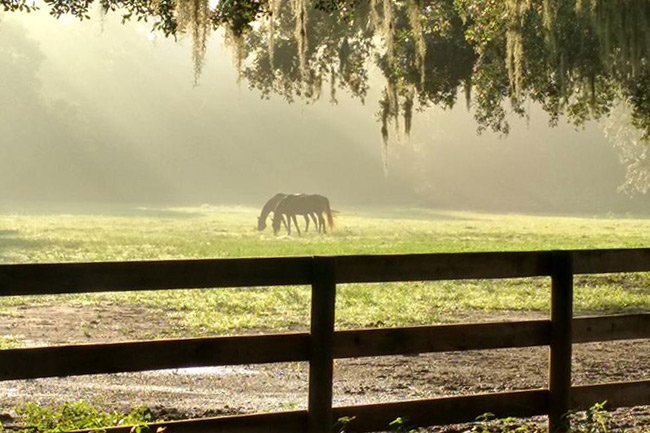 Middleton Place Equestrian Center