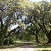 Mullet Hall Plantation
