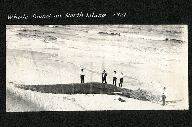North Island Whale
