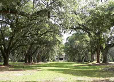 Oak Lawn Plantation