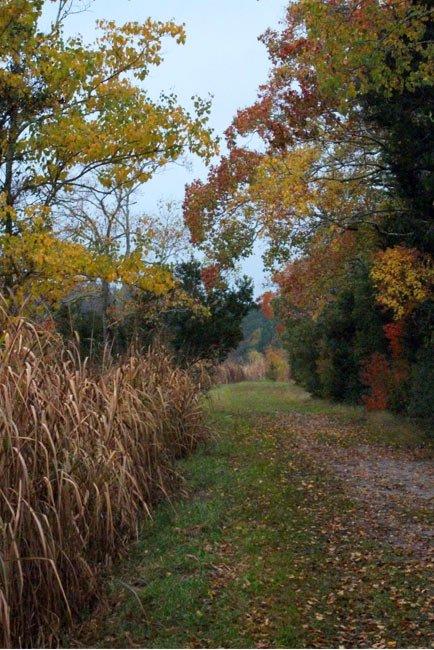 Path through Middleton Rice Fields