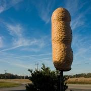 Pelion Peanut