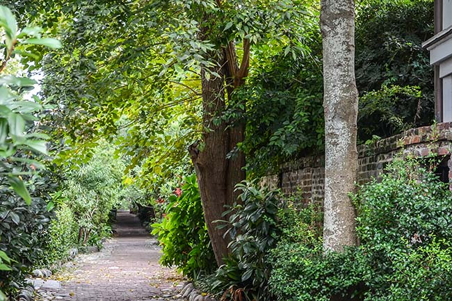 Philadelphia Alley, Lush Greenery, Charleston