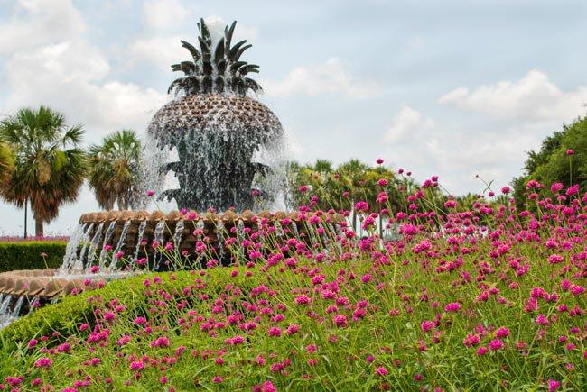 Pineapple Fountain Wildflowers