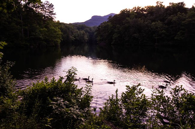 Pinnacle Lake Ducks