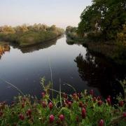 Pocotaligo River