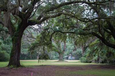 Ravenel Plantation
