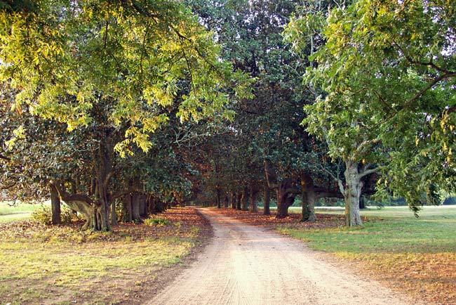 Redcliffe Plantation Entrance