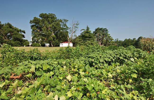 Redcliffe Plantation Garden