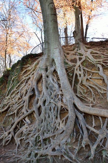 Reedy River Medusa Tree