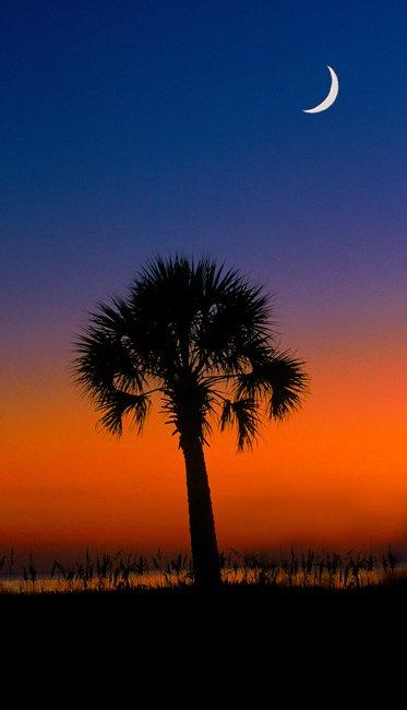 Hilton Head Island Palm Trees