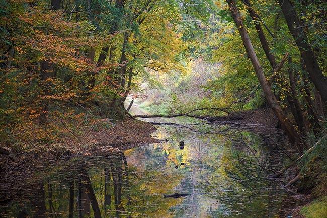 Saluda Shoals Park Creek