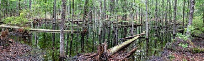 Samtee Park Sinkhole Pond