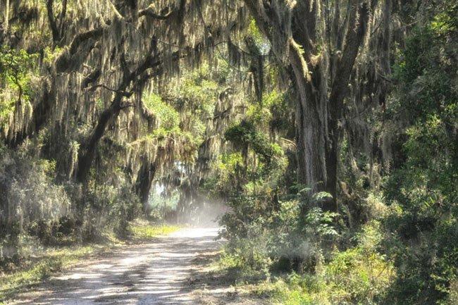 Savannah NWR Road