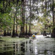 Sparkleberry Swamp Paddling
