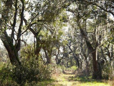 Spring Grove Plantation