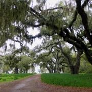 Spring Island Plantation