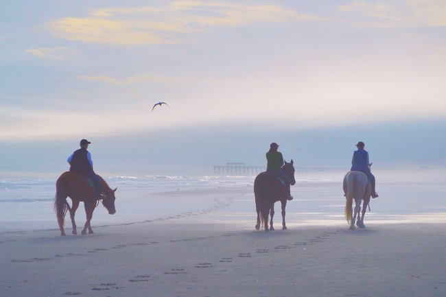 Horses at Springmaid Pier in Myrtle Beach