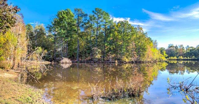 Stumpy Pond Panorama