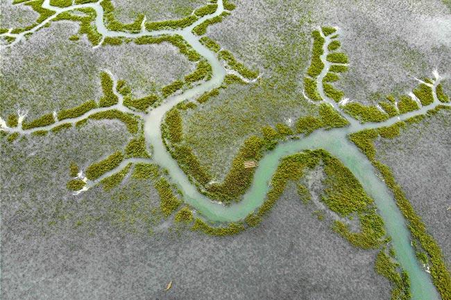 Sullivan's Island Marsh