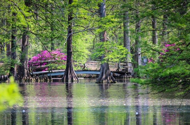 Swan Lake Bridge