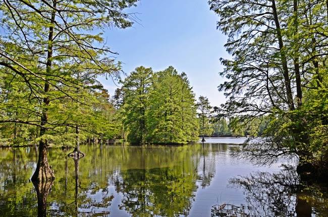 Swan Lake Gardens