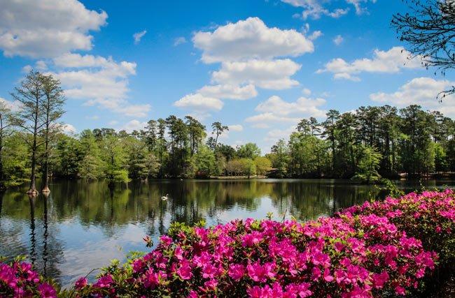 7b74a19404dfc6 Swan Lake Iris Gardens - Sumter, South Carolina