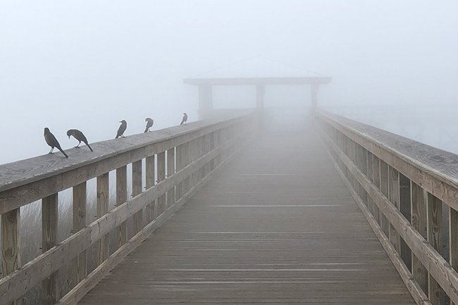 The Sands in Fog, Port Royal