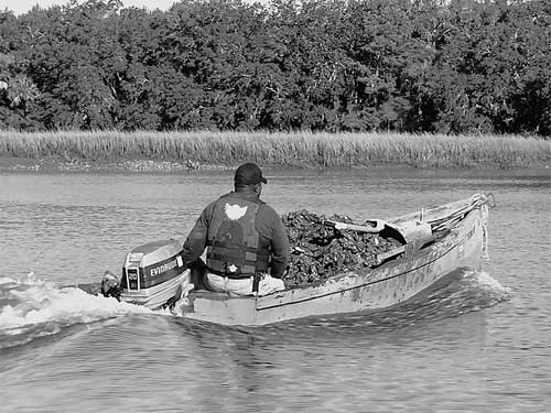Transporting Oysters