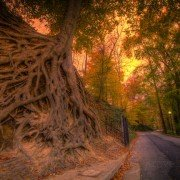 Tree on Greenville's Swamp Rabbit Trail