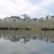 Waccamaw Riverbank