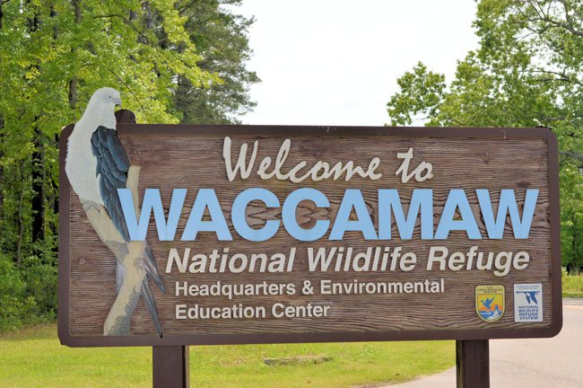 Waccamaw National Wildlife Refuge