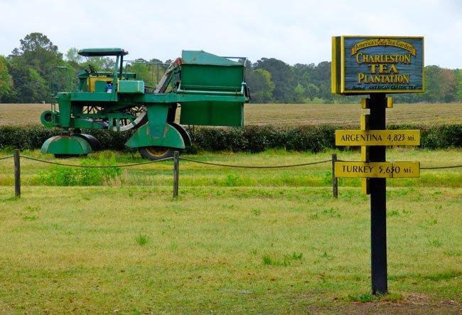 Wadmalaw Tea Farm