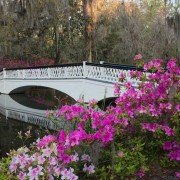 Charleston Gardens and Plantations