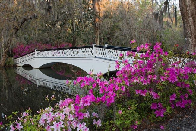 White Bridge at Magnolia Gardens