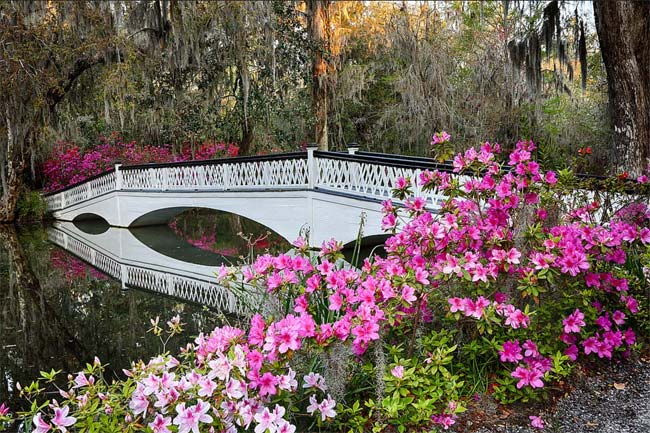 White Bridge at Magnolia Gardens