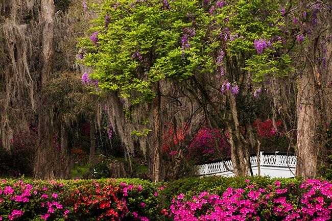 Springtime scene Magnolia Plantation and Gardens