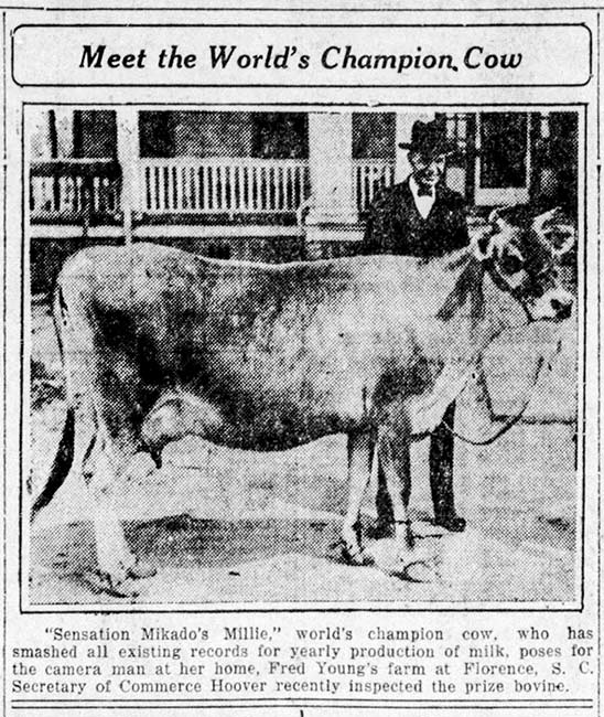 World Champion Cow, Young Farm
